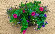 Red Flowers For Hanging Baskets  28 Free Hd Wallpaper