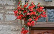 Red Flowers For Hanging Baskets  33 Desktop Background