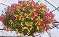 Red Flowers For Hanging Baskets  34 High Resolution Wallpaper