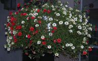 Red Flowers For Hanging Baskets  8 Desktop Background