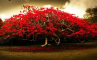 Red Flowers Hd Wallpapers  14 Hd Wallpaper