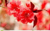 Red Flowers In Spring  1 Desktop Wallpaper