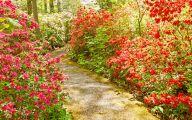 Red Flowers In Spring  11 Desktop Background