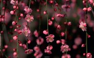Red Flowers In Spring  14 Cool Hd Wallpaper