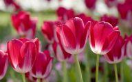 Red Flowers In Spring  16 Desktop Background