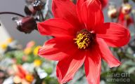 Red Flowers In Spring  21 Background Wallpaper