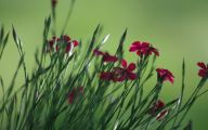 Red Flowers In Spring  22 Free Hd Wallpaper
