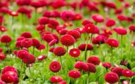 Red Flowers In Spring  27 Hd Wallpaper