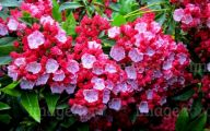 Red Flowers In Spring  31 Cool Hd Wallpaper