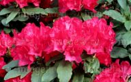 Red Flowers In Spring  32 Cool Hd Wallpaper