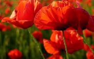 Red Flowers In Spring  4 Desktop Background