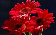Red Flowers With 8 Letters  23 Background