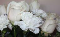 White Carnation 23 Widescreen Wallpaper
