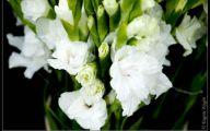White Carnation 26 Widescreen Wallpaper