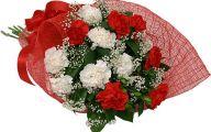 White Carnation 7 Background