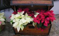 White Flowers For Christmas  2 High Resolution Wallpaper