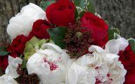 White Flowers For Christmas  8 Desktop Background