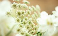 White Flowers For Wedding  34 Background Wallpaper