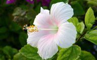 White Flowers Hd  15 Free Wallpaper