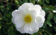 White Flowers Hd  21 Wide Wallpaper