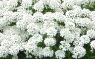 White Flowers Hd  41 Wide Wallpaper