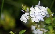 White Flowers Hd  5 Cool Wallpaper