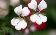 White Flowers Hd  9 Background Wallpaper