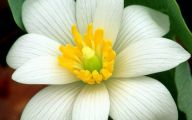 White Flowers Hd Wallpapers  14 Cool Hd Wallpaper