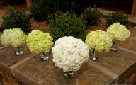 White Flowers Hydrangea  29 High Resolution Wallpaper
