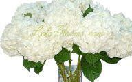White Flowers Hydrangea  7 Background