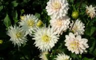 White Flowers Images  12 Widescreen Wallpaper