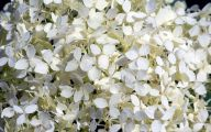 White Flowers Images  3 High Resolution Wallpaper