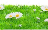 White Flowers In Grass  1 Wide Wallpaper