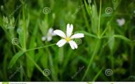 White Flowers In Grass  12 Background Wallpaper