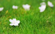 White Flowers In Grass  17 Wide Wallpaper
