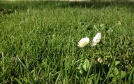 White Flowers In Grass  19 Cool Hd Wallpaper