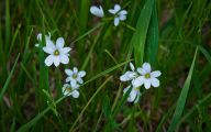 White Flowers In Grass  2 Cool Wallpaper