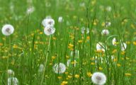 White Flowers In Grass  20 Free Wallpaper