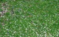 White Flowers In Grass  22 Free Wallpaper