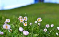 White Flowers In Grass  25 Cool Wallpaper