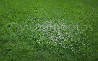 White Flowers In Grass  28 Widescreen Wallpaper