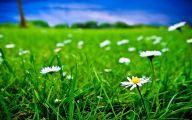 White Flowers In Grass  29 Desktop Background