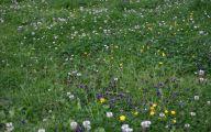White Flowers In Grass  3 Desktop Wallpaper