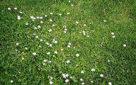 White Flowers In Grass  31 High Resolution Wallpaper