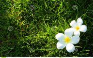 White Flowers In Grass  4 Hd Wallpaper