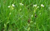 White Flowers In Grass  6 Widescreen Wallpaper