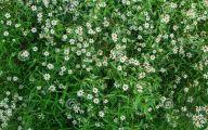 White Flowers In Grass  7 High Resolution Wallpaper