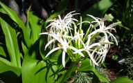 White Flowers In Hawaii  20 Background