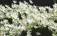 White Flowers In October  15 Widescreen Wallpaper