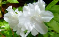 White Flowers In October  18 Widescreen Wallpaper